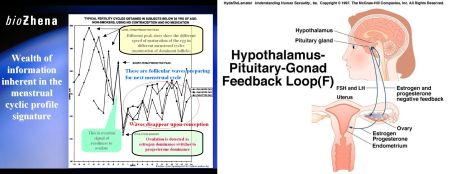 Menstrual cyclic profile signature of the HPG feedback mechanism